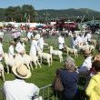 17061701 June 16th 2017 Royal Three Counties Show, The Showground, Malvern